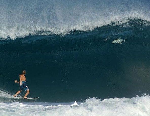 Surfer_GT