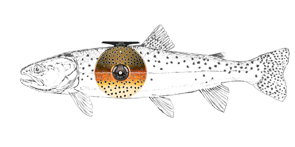 drawing and design by Al Q for Abel Fly Reels