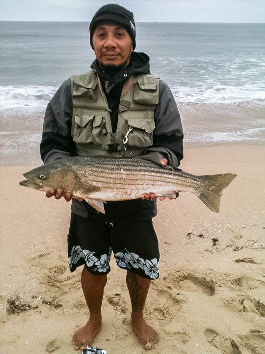 Striped bass flies sand surf for Surf fishing for stripers