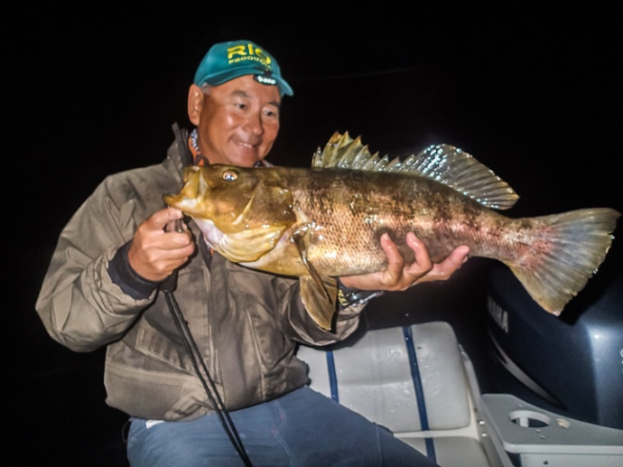 nice night time calico bass landed by Glenn Ueda. photo by Glen Ueda.