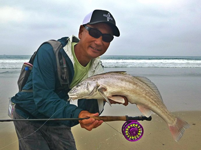 another nice corbina fair hooked on a sparse grizzly hackle fly by the master, Glen Ueda. Photo by Jim Solomon