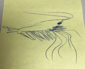 Original sketch for the utlra shrimp fleye by Bob Popovics