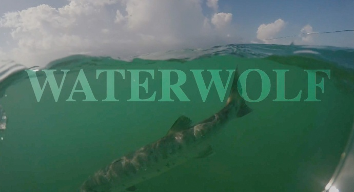 waterwolf